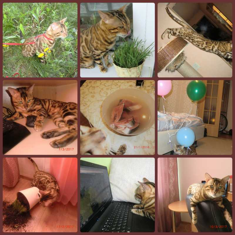 collage_photocat.jpg